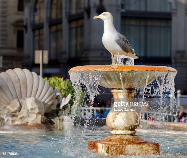 A seagull on the fountain is seen at Piazza Colonna on November 1 2017 in Rome Italy Rome is one of the most popular tourist destinations in the World