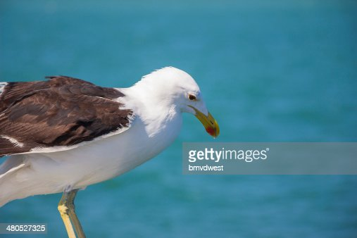 Seagull Perched on Edge of Boat : Stock Photo
