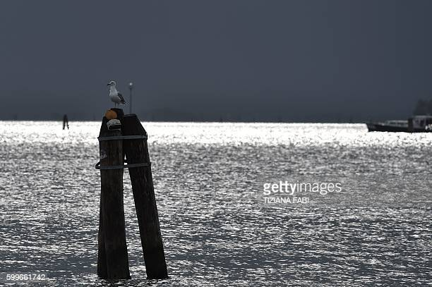 A seagull rests on a pole at Venice Lido during the 73rd Venice Film Festival on September 6 2016 / AFP / TIZIANA FABI