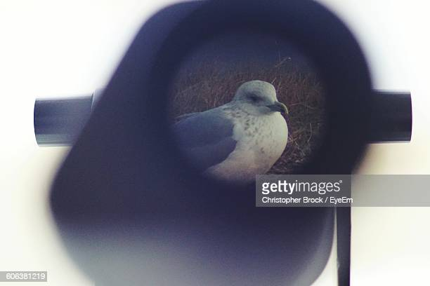 Seagull Seen Through Coin-Operated Binocular Against Clear Sky