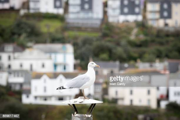 A seagull sits on a chimney in the harbour in the village of Mevagissey which has submitted plans to limit the number of second homes on October 9...
