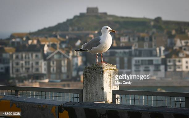 A seagull sits on a post in St Ives on April 8 2015 in Cornwall England Prime Minister David Cameron has said that the six seats in the county of...