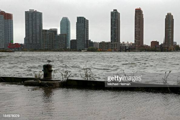 A seagull sits perched in front of the Long Island City skyline along the banks of the overflowing East River ahead of Hurricane Sandy October 29...