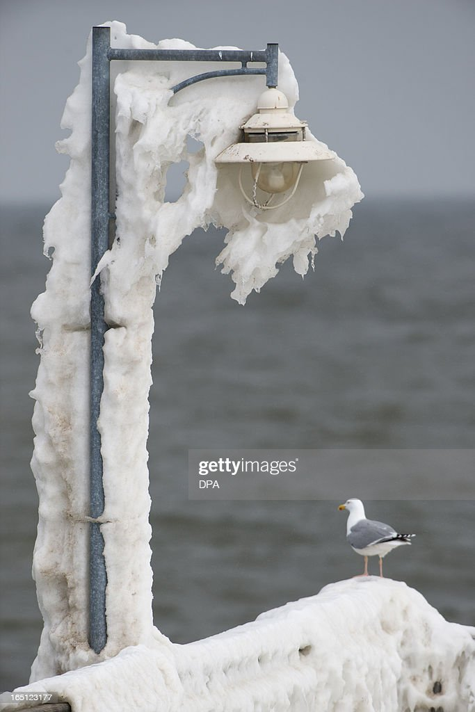 A seagull stands on a pier covered with icicles on the island of Ruegen in Goehren, Germany, on March 31, 2013.