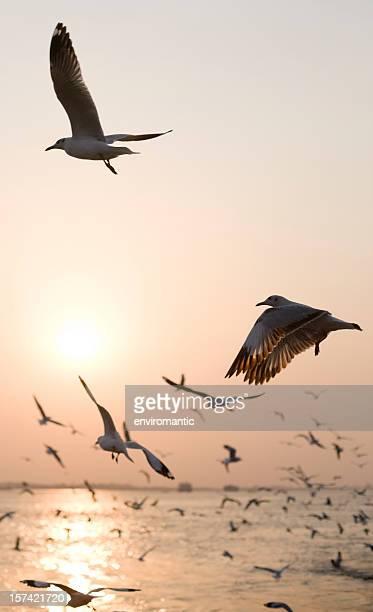 Seagull sunset background.