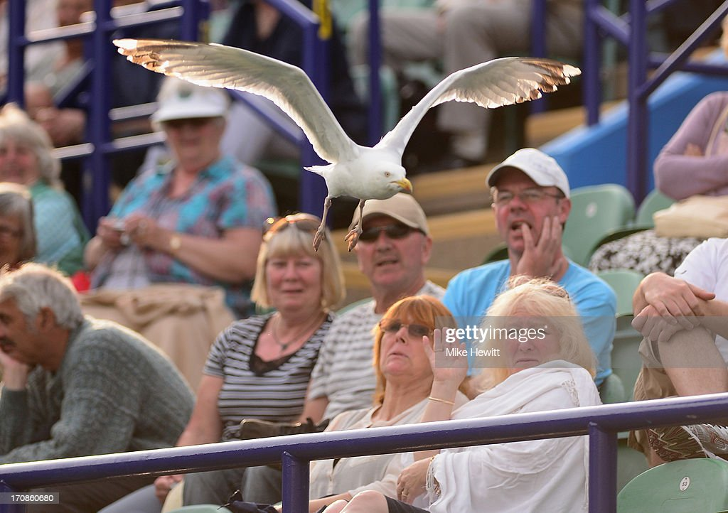A seagull terrorises the locals during Day Five of the AEGON International at Devonshire Park on June 19, 2013 in Eastbourne, England.
