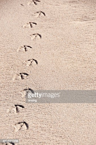 Seagull tracks in pink colored sand- copy space : Stock Photo