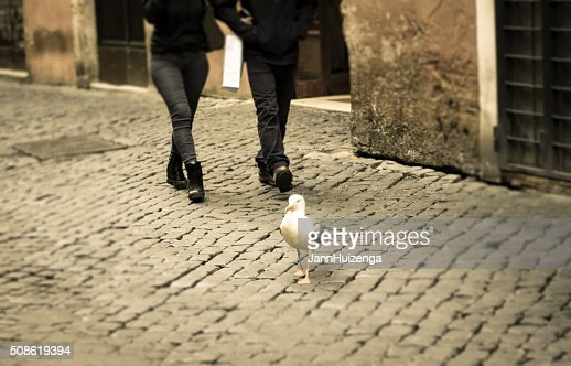 Seagull  Walking on Cobbled Street, Rome : Stock Photo