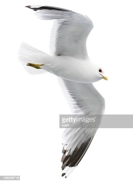 Seagull 、クリッピングパスを白背景