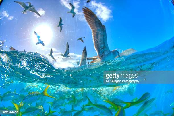 Seagulls and reef fish