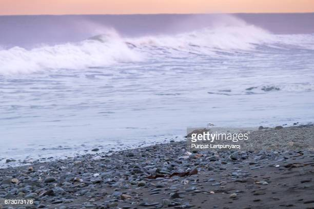 Seagulls and Wave at Hokitika on the West Coast of New Zealand's South Island.