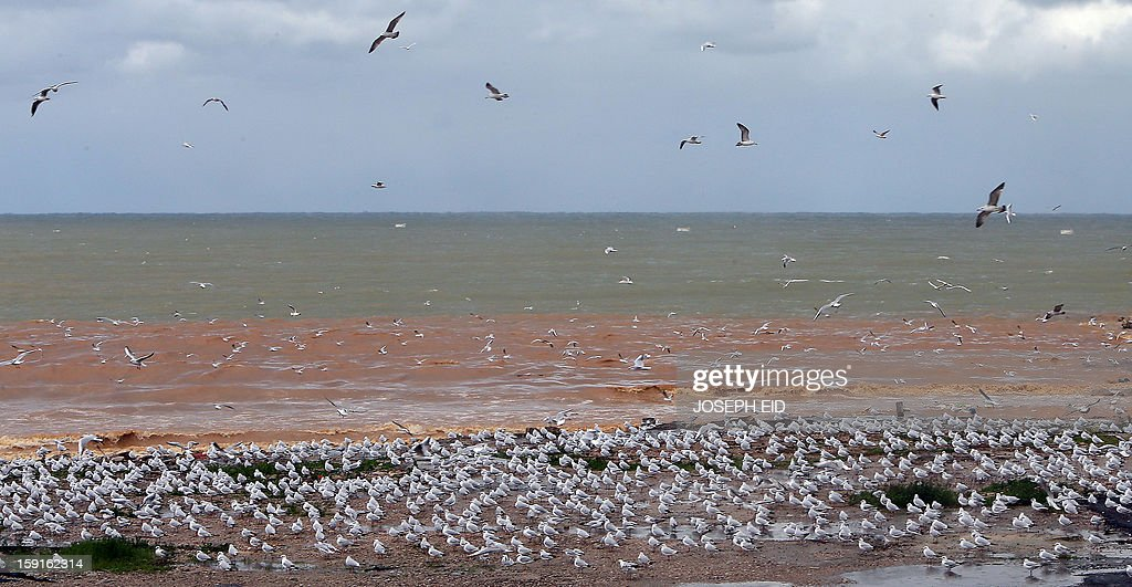 Seagulls are seen on the seashore of Dbayeh at the northern entrance of Beirut on January 9, 2013 as heavy rains and high speed winds hit Lebanon. A met office official at Beirut airport said the storm would continue and that lower temperatures would result in snowfall in the mountains as low as 300 metres.