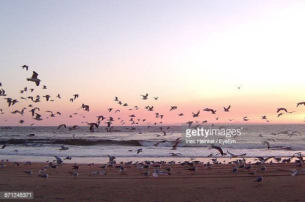 Seagulls At Beach Against Sky At Sunset