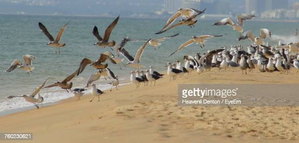 Seagulls At Beach