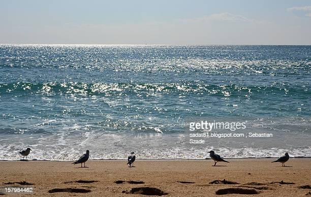 Seagulls at Eastern Sea shore