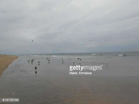 Seagulls At Gunnison Beach At Sandy Hook Nj Stock Photo