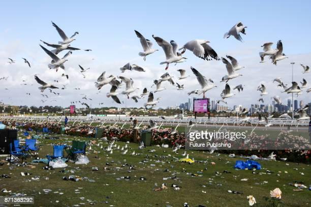 Seagulls descend on food left behind at the Melbourne Cup Carnival on November 7 2017 in Melbourne Australia Chris Putnam / Barcroft Images