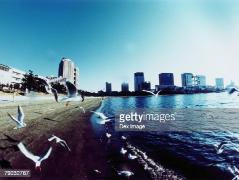 Seagulls fly above the waves under a clear sky : Stock Photo