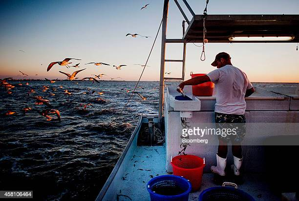 Seagulls fly near a shrimper sorting the day's catch on a shrimping boat off the coast of Grand Isle Louisiana US on Wednesday Oct 22 2014 Louisiana...