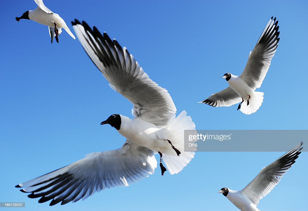Seagulls fly over a harbour in Travemuende, on March 31, 2013. AFP PHOTO / Ole Spata /GERMANY OUT