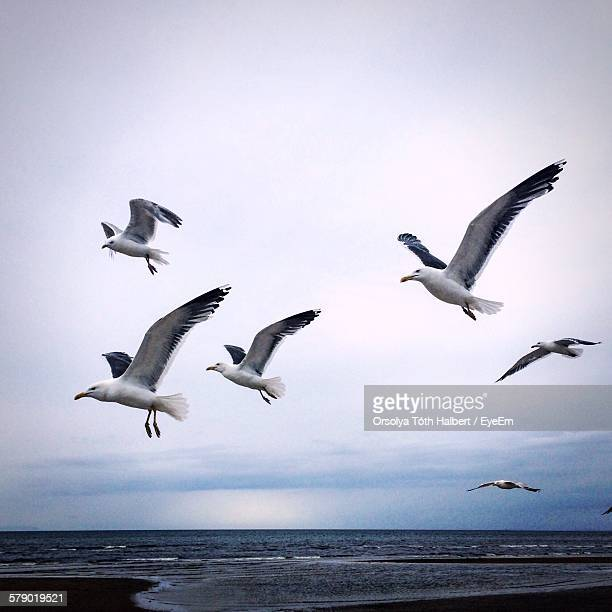 Seagulls Flying Above Sea Against Sky