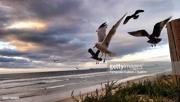 Seagulls Flying At Beach Against Cloudy Sky