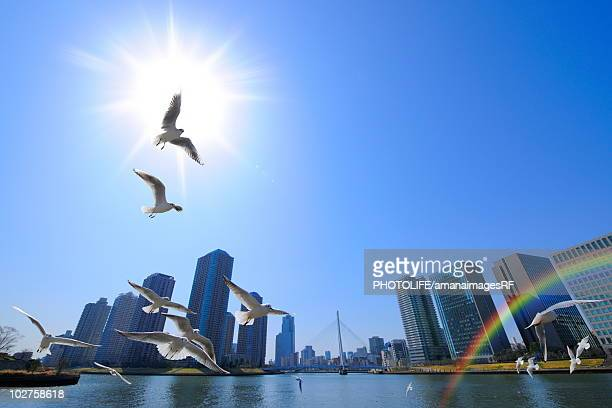 Seagulls flying in the sky, Tokyo Prefecture, Honshu, Japan