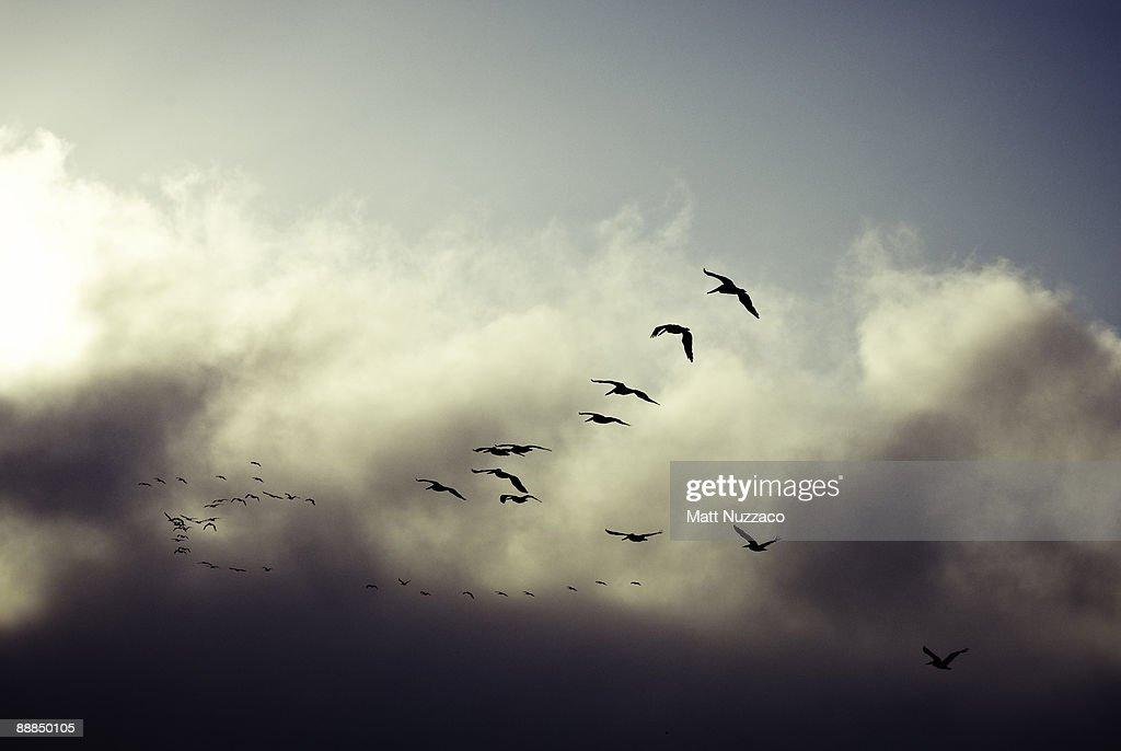 Seagulls flying into fog : Stock Photo