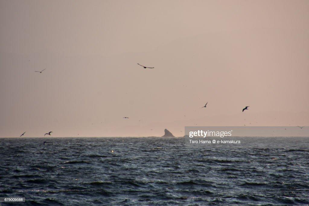 Seagulls flying on the Eboshi rock islands in Sagami Bay : ストックフォト