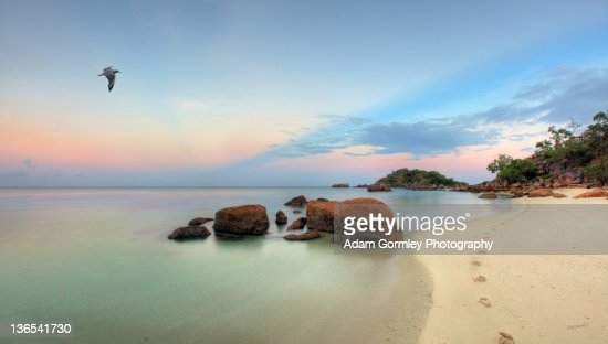 Seagulls flying over Lizard Island