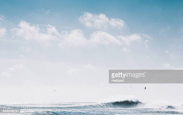 Seascape with seagulls and wave under cloudy sky