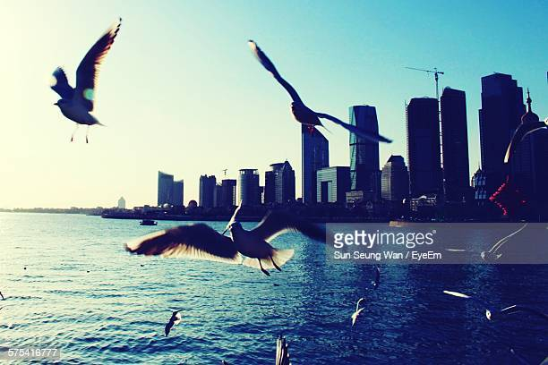 Seagulls Flying Over River Against Cityscape