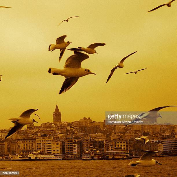 Seagulls Flying Over River With City In Background