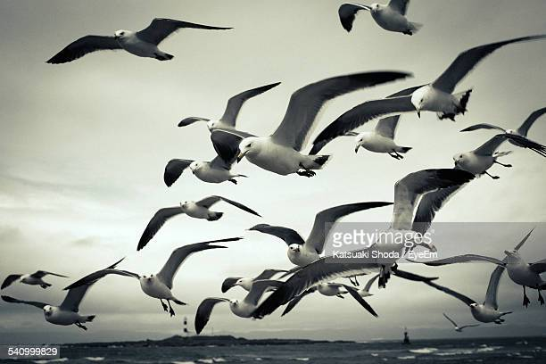Seagulls Flying Over Sea Against Sky