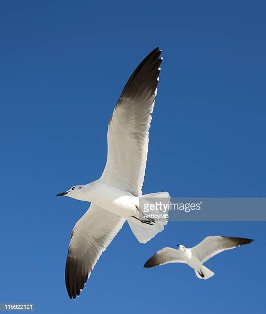 Seagulls II