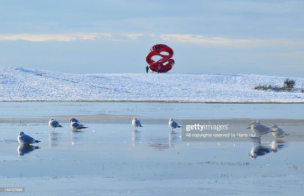 Seagulls in Garry Point Park