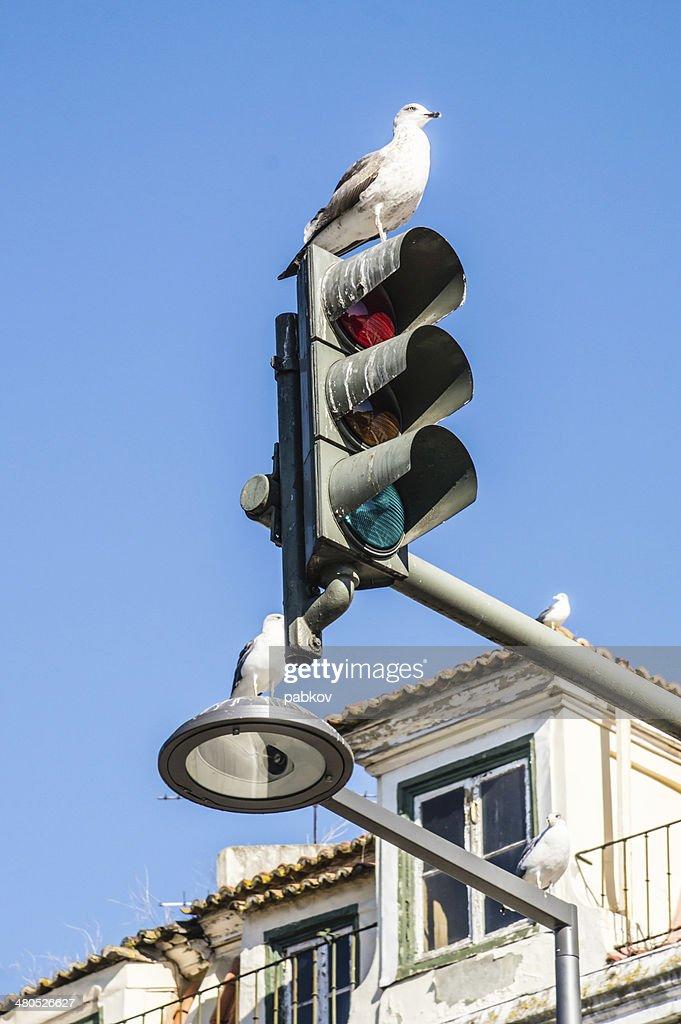 seagulls in Rossio Square in Lisbon, Portugal : Stock Photo