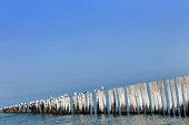 seagulls on a wooden breakwater