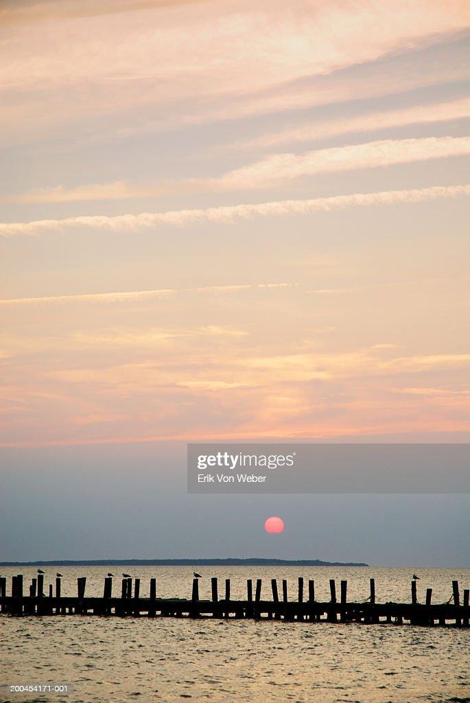 Seagulls (Laridae) on pier, sunset