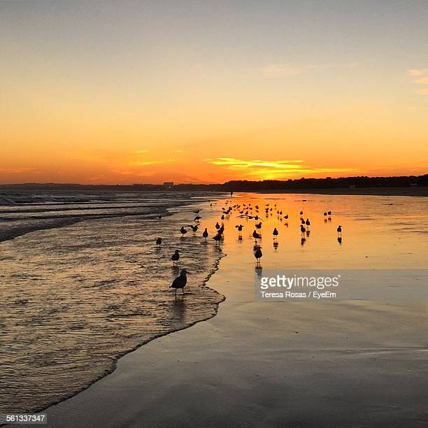 Seagulls On Shore During Sunset