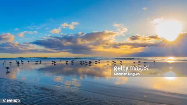Seagulls on the beach of Gold Coast, Australia, with rising sun