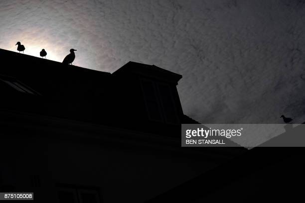 Seagulls perch on a wall in Nansledan housing development championed by Britain's Prince Charles Prince of Wales at Newquay town in Cornwall on...