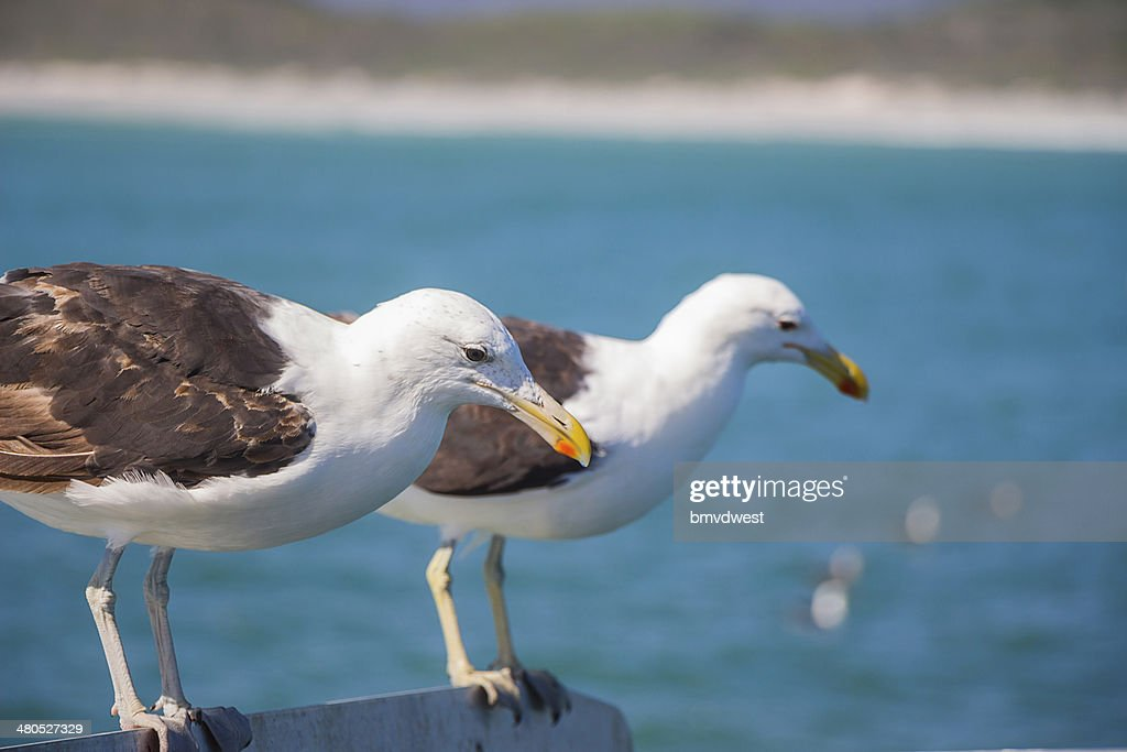 Seagulls Perched on Edge of Boat : Stock Photo