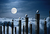 Seagulls perched on wooden posts under a full moon.