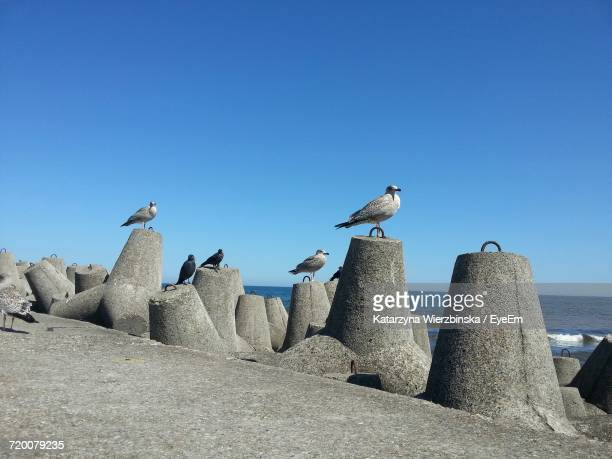 Seagulls Perching Against Clear Blue Sky