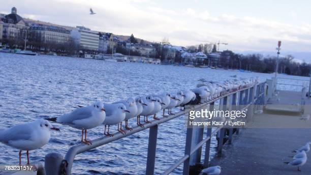 Seagulls Perching On Railing Against Lake