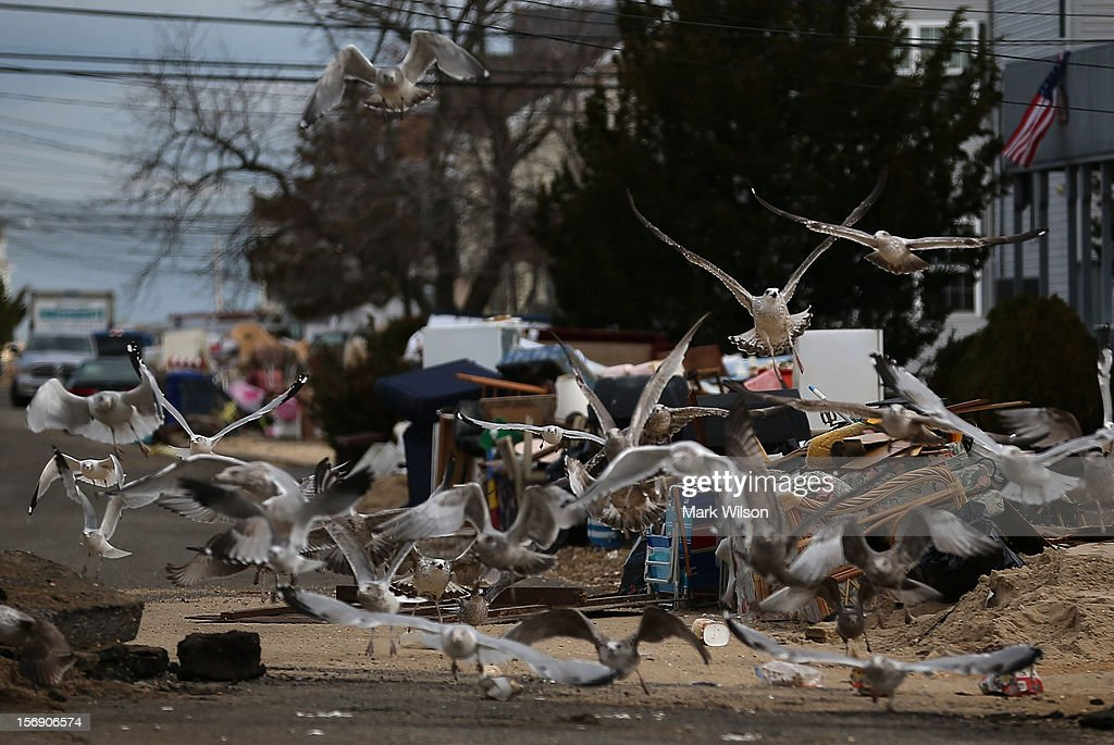Seagulls pick at trash that is piled up in front of homes damaged by Superstorm Sandy, on November 24, 2012 in Ortley Beach, New Jersey. New Jersey Gov. Christie estimated that Superstorm Sandy cost New Jersey $29.4 billion in damage and economic losses.