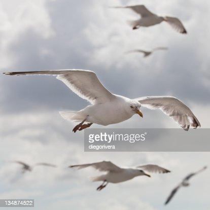 Seagulls : ストックフォト
