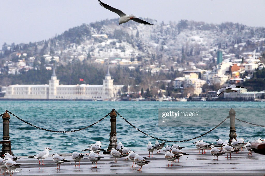 Seagulls rest on the edge of the Bosphorus river after a snow storm, in Istanbul, on January 9, 2013. Heavy snowfall blanketed Turkey's commercial hub Istanbul, a city of 15 million, paralysing daily life and disrupting air traffic and land transport. AFP PHOTO / MIRA