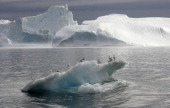 Seagulls stand on an iceberg floating in a fjord near Ilulissat in Greenland 16 August 2007 German Chancellor Angela Merkel and German Environment...